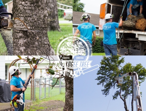 What Makes A Tree Care Company?